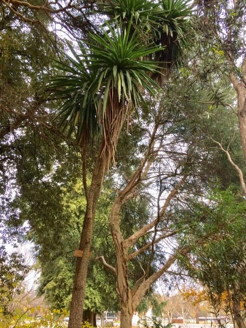Botanical gardens, FullSizeRender 1