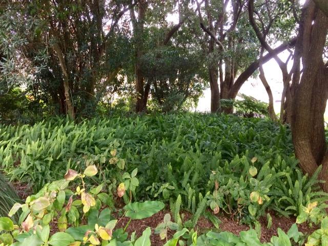 Botanical gardens, FullSizeRender 13