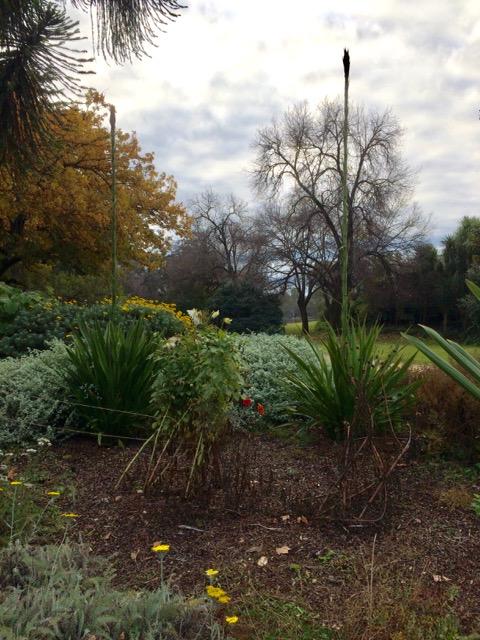 Botanical gardens, FullSizeRender 4