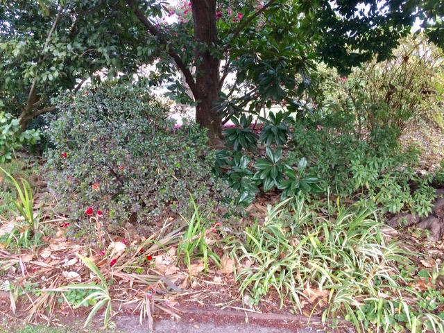 Botanical gardens, FullSizeRender 5